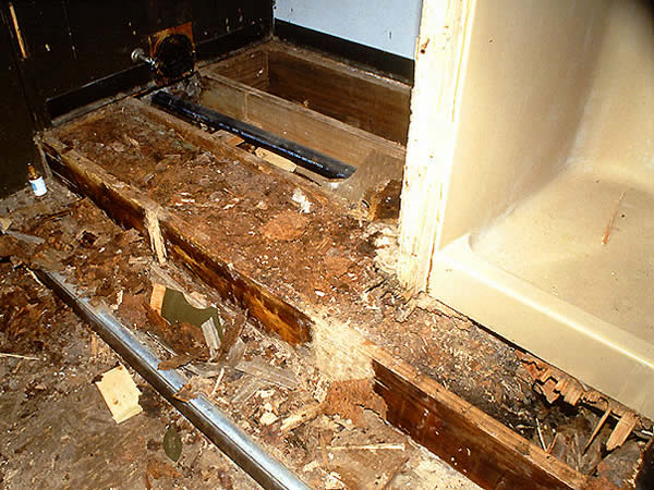 Termite Extermination Dallas Fort Worth Texas