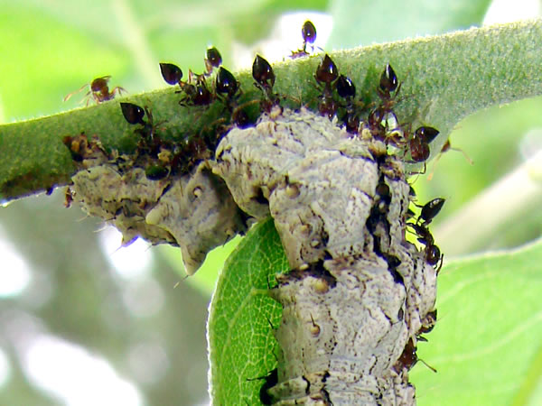 Small Ant Extermination Amp Control Dallas Fort Worth Texas